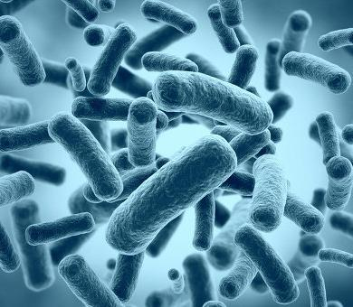 Intestinal bacteria and their effects on the body