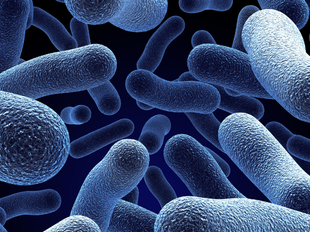 Role of Probiotics in maintaining human health