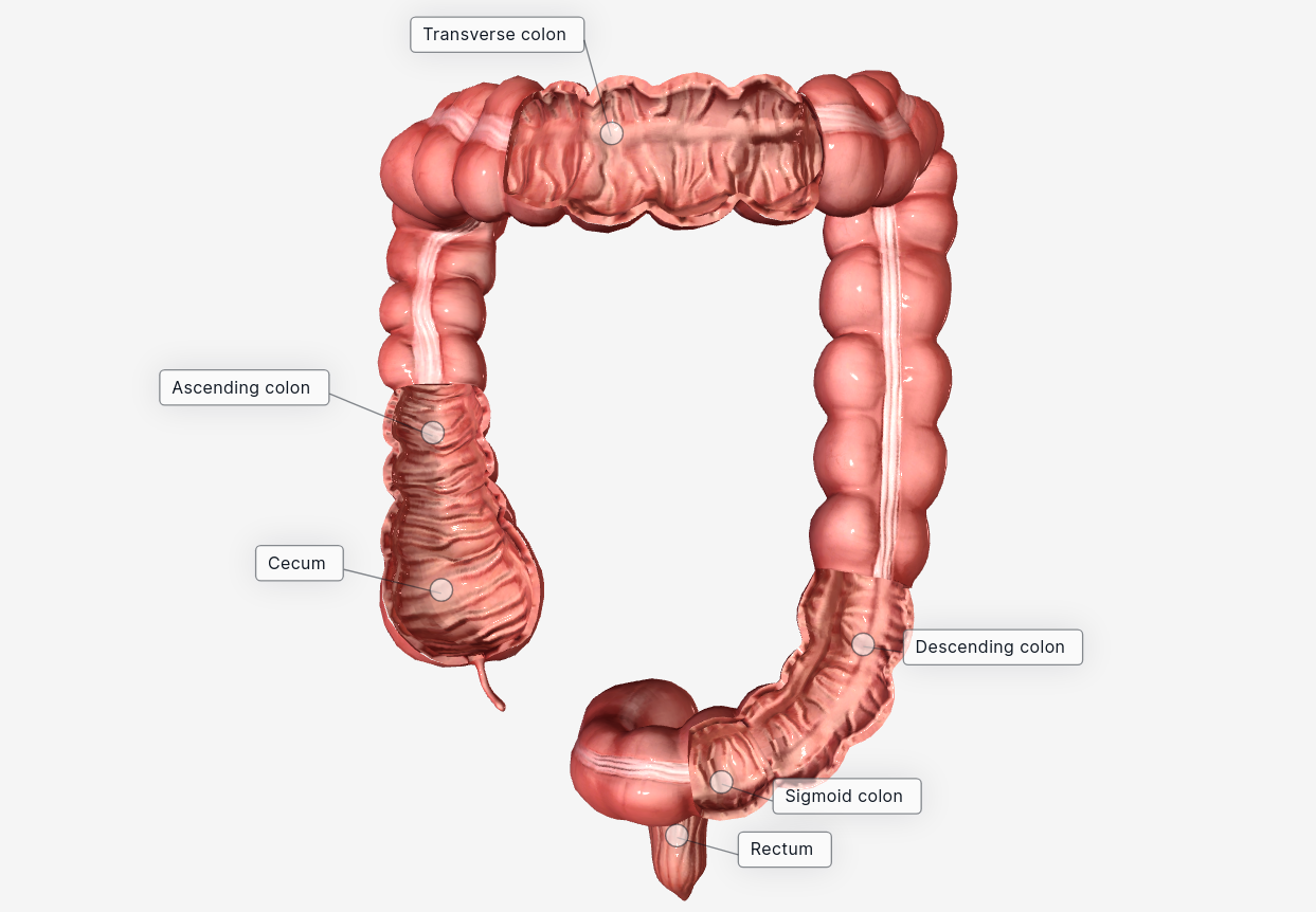 WHY colonic irrigation? To prevent colon cancer or Irritable bowel syndrome