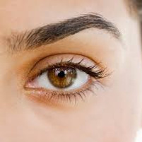 Basic Brow Tidy only