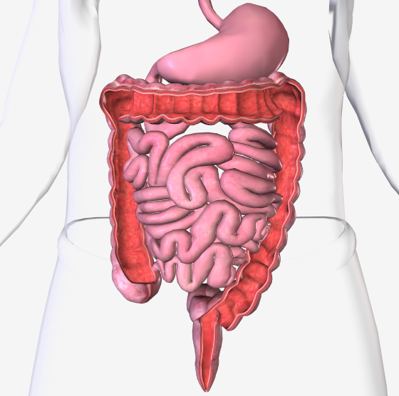 Theory Of Colonic Irrigation