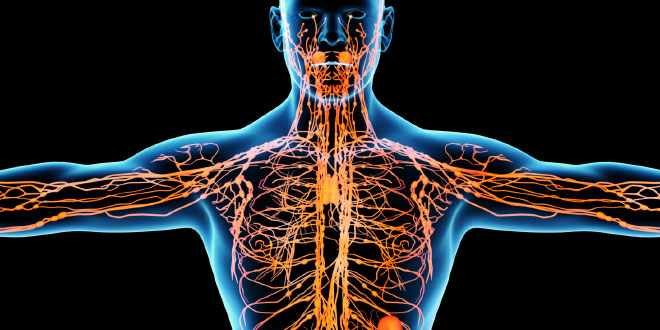 Stagnation and purification of lymph