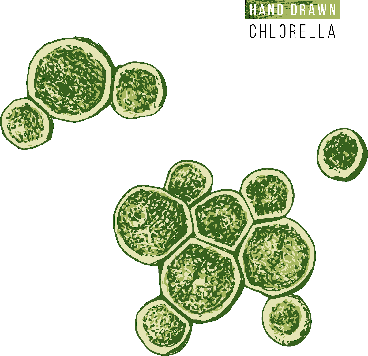 Health benefits of Chlorella food for body and blood