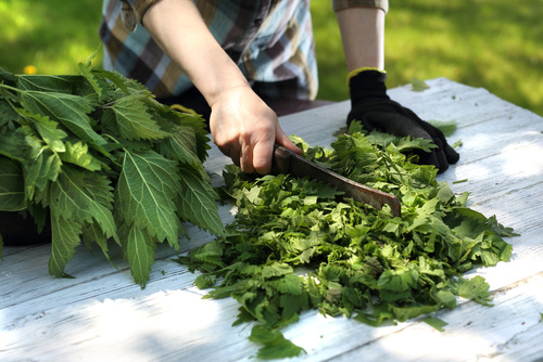 HERBALISM and health – 5 STEPS TO MAKE LIFE BETTER