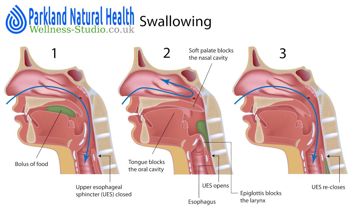 Pharynx, oesophagus and swallowing